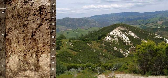 Haploxerolls and landscape CA