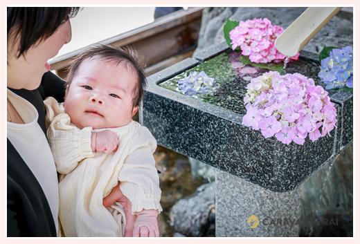 お宮参り 赤ちゃんとアジサイの花
