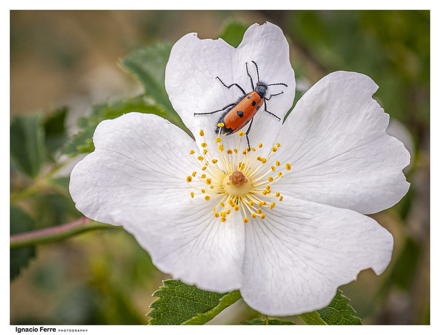 On the flower