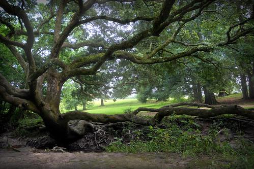 topaz tree roots landscape