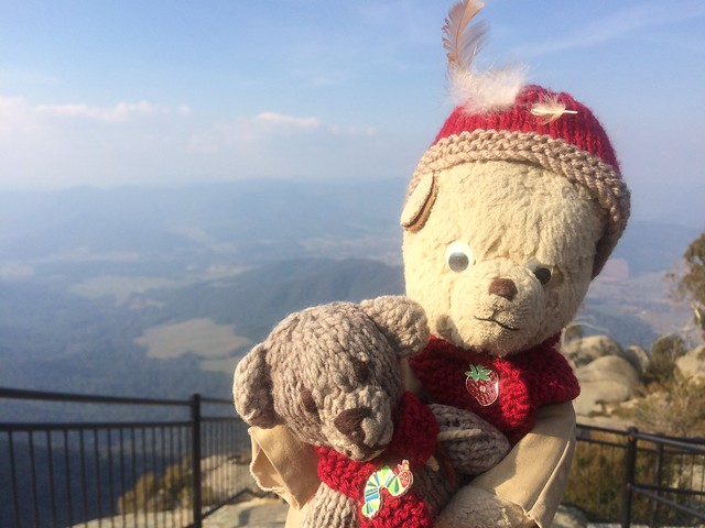 Paddington and Scout at Echo Point