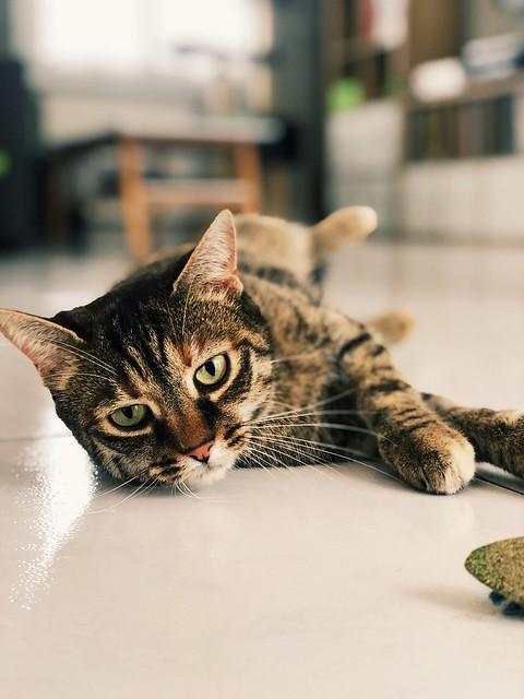 Chat suffit cette chat leur 😸