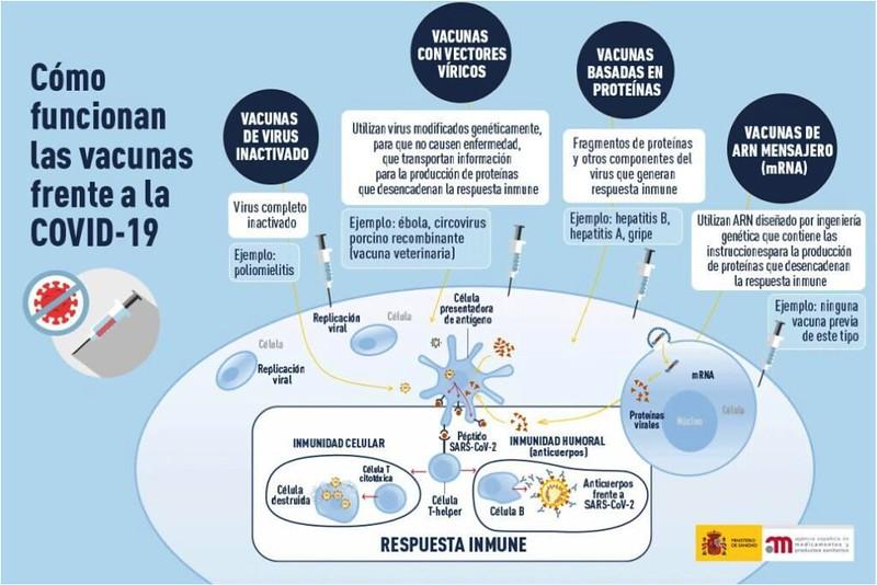 Funcionamiento vacunas covid-19