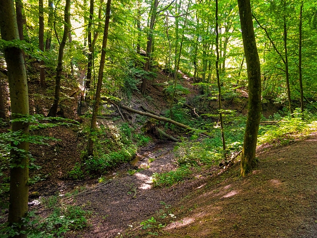 Morning in the forest 1 / Morgens im Wald 1