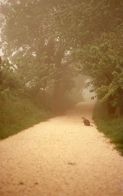 nebbia estiva