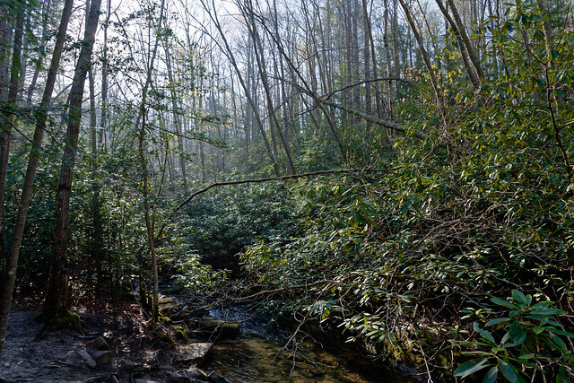 Trees With Sunshine Along the Endless Wall Trail (New River Gorge National Park & Preserve)