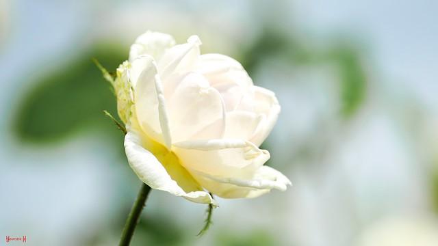 9856 - natural white #SmileOnSaturday