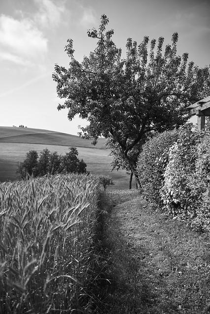 country scene 2