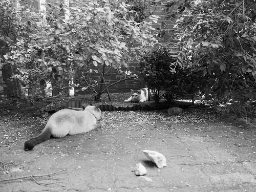 7e5_6193758-cat-fight-2-4