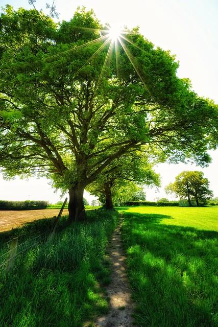Seeking shade (explored)