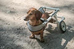 Retired Doggy  (由  Dimi Alexeyev