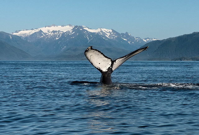 Sitka, Alaska Photo Tour August 2021