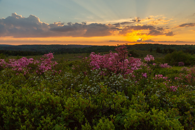 Sunset at the Dolly Sods