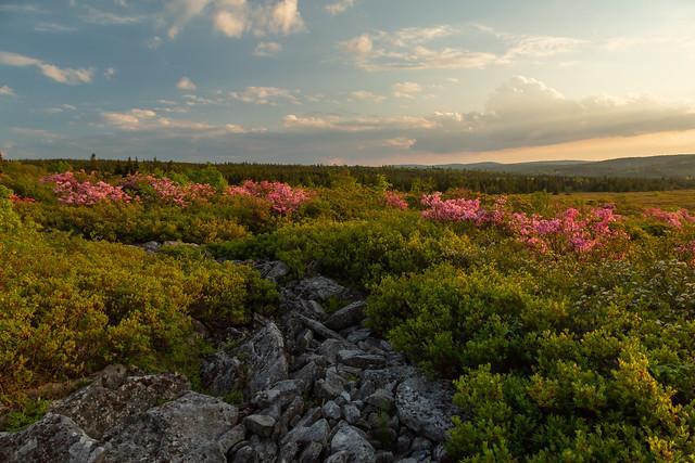 Dolly Sods Spring Sunset