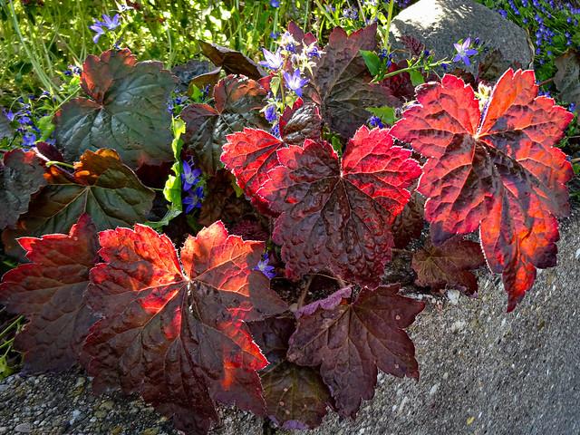 Leaves in sunlight / Blätter im Sonnenlicht