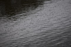 raindrops on the Thames
