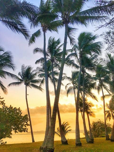 Pasir Ris Park sunrise