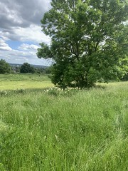 Whitehorse Meadow photo collection no. 45