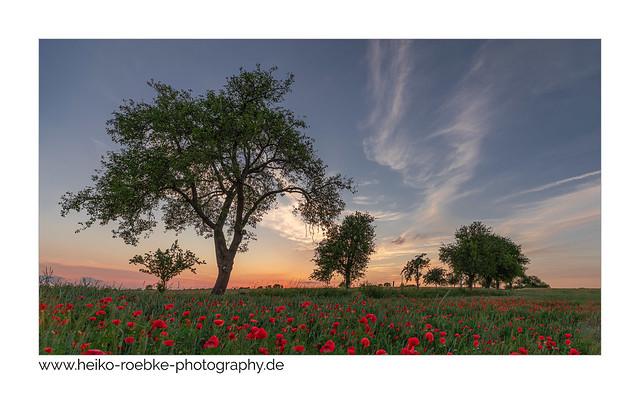 landscape with poppy!