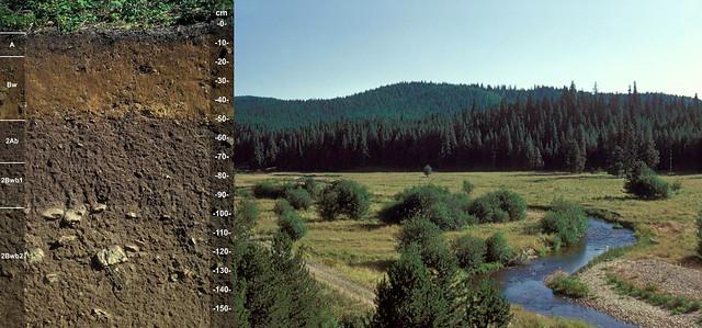 Vitrandic Dystrudepts and landscape ID