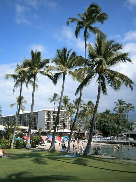 Kamakahonu Beach Palm Trees