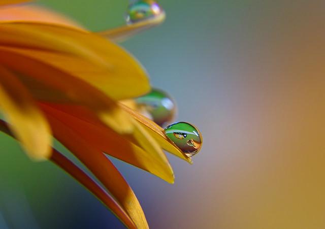 Drop with ladybug