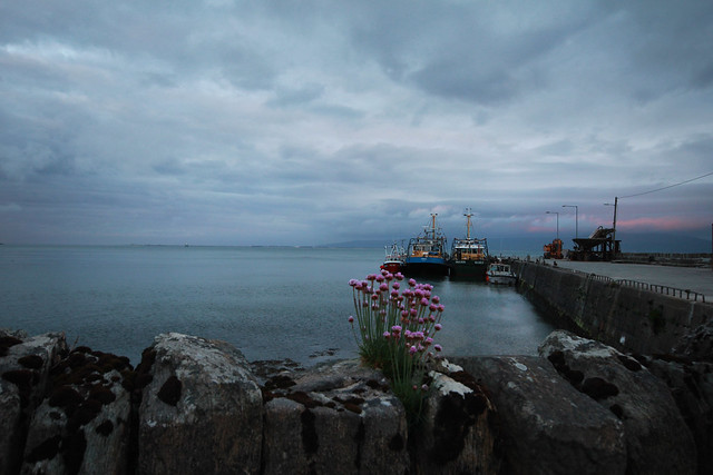 Moville Boats