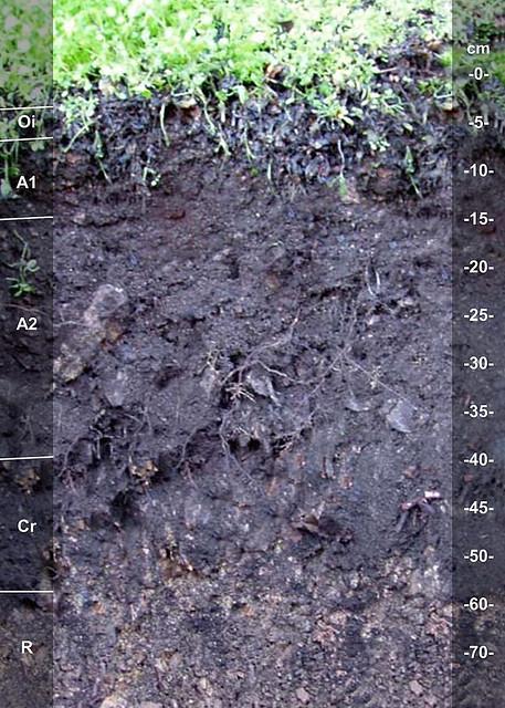 Highpeake soil series CA