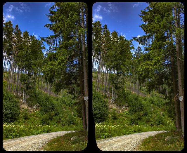 Harz forest 3-D / CrossView / Stereoscopy