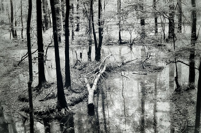 """""""A Walk in the Forest (B&W)"""" - (in Explore! 6/21/2021)"""
