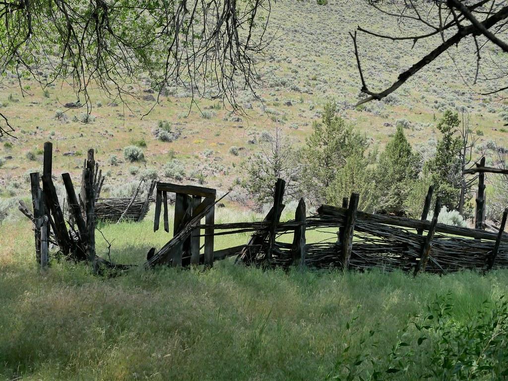 Old wattle corral Barnes spring Frenchglen brighter