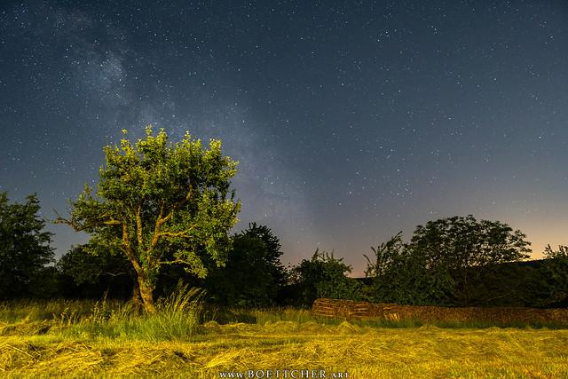 Dilsberg Milky Way in the Meadow - June 2021 X