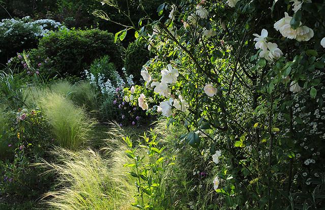 In my garden - France