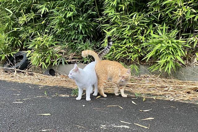 Today's Cat@2021−06−19