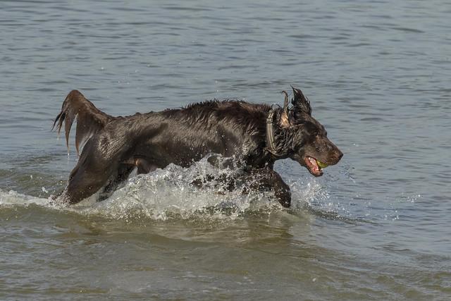 Dog - Nieuwe Waterweg - Hoek van Holland