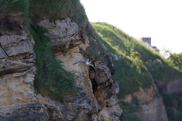 Home and Playground for Fulmars