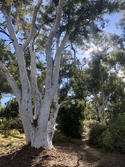 Australian National Botanic Gardens, Canberra