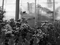 Greenhouse of Cacti
