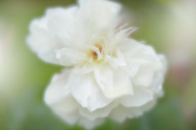 Natural White...