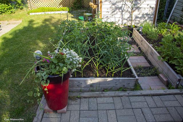 Our garden in a planter.