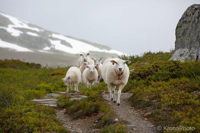 Mountain life, Ål, Norway