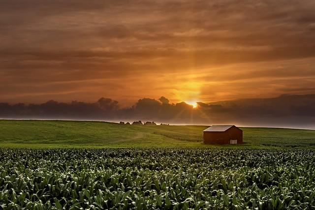 Paw-Paw's Farm