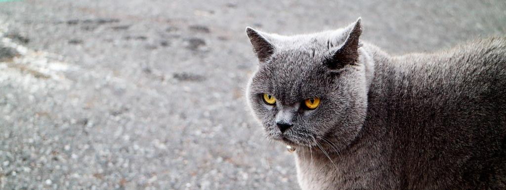 Black Cat With Orange Eyes