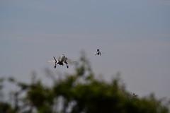 F-35s at Marham June 2021