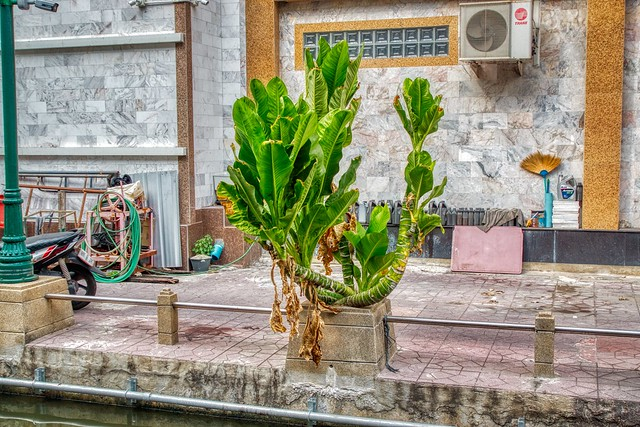 Plant life in the Big City (Bangkok, Thailand)