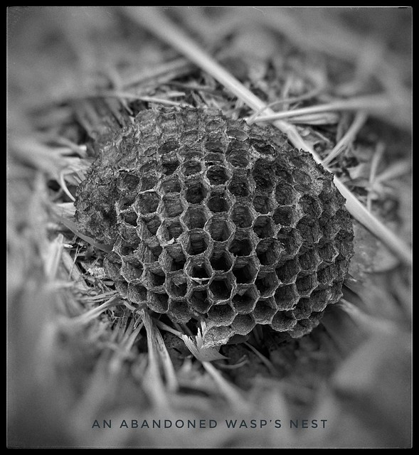 An Abandoned Wasp's Nest