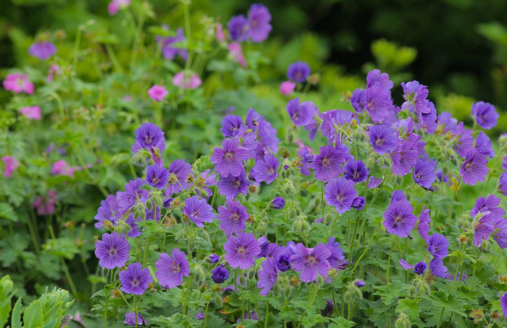 Purples & Raindrops