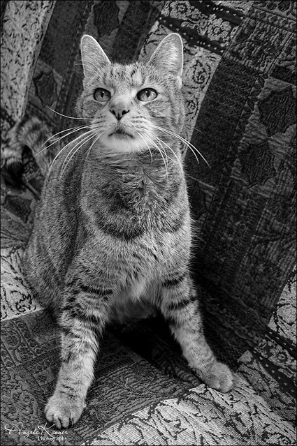 Happy Caturday...