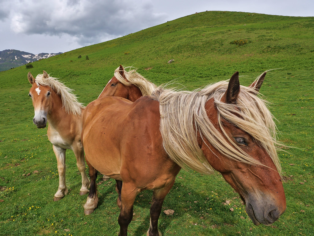 Famille de chevaux 51259058472_2d5ed976bb_b
