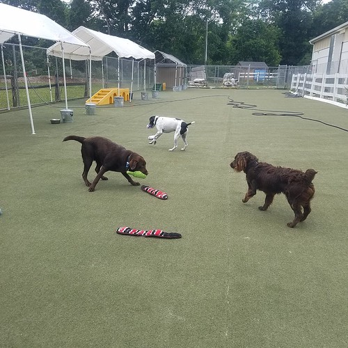 6-20-21 Squeaky Toys! :)